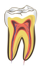 Healthy nerve of tooth